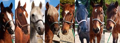 Harmony Farm Awaji の馬たち