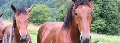 Harmony Farm Kyoto の馬たち