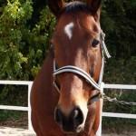 05b9d2536837ec76199676265ac5368f e1291083212156 150x150 HFKの馬たち
