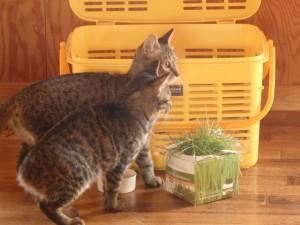 146de7d3d7034220b85d51f07c38487d 300x225 猫の名前