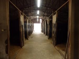 1a36390e5b83913b964504287294e8ae 300x225 馬はどこへ消えた?