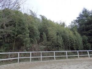 20a780fd4a118c9250b3e28909630629 300x225 城陽市の木は梅です
