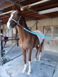 339bf1d60f68dd36cc4cbdee72482848 225x300 馬場、蹄洗場、馬房