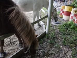 400b5079304e8a9ffeaabc4f9b9f924c 300x225 「馬」を使った