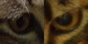 4064560fbd2f8f6ae7723a0a4e77eab82 300x150 どっちの猫でショー