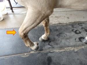 40d2faa3cc30eaad579165dafd6698b3 300x225 馬の脚