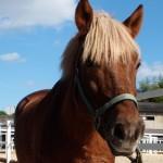 44c7ede2a36183146ac5cf036ac5ed37 e1291082338259 150x150 HFKの馬たち