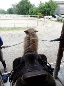 44c7ede2a36183146ac5cf036ac5ed378 225x300 上から馬を見てみよう