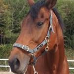 5317f88a9514d3ca269b5fe49bc4c903 e1302831547529 150x150 HFKの馬たち