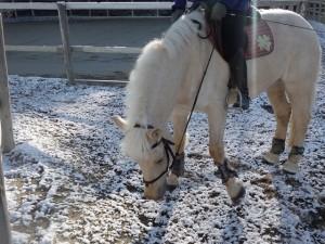 5d40420544ac0fe98d070738aa38def4 300x225 雪と馬