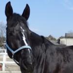 6060a3bee20629950420e9c5b95a4cb5 e1392687579461 150x150 HFKの馬たち