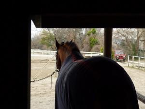 6c712a578dea01c16702ba83376ec51d1 300x225 おたべの馬窓から