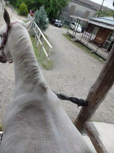 6dd9be653b26b13b23acc68a8c78c66a3 225x300 上から馬を見てみよう