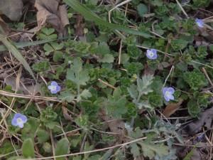 9c318d6c9fa2305c84b8b5aa4b39ef15 300x225 もうすぐ春ですね