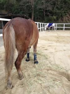 IMG 1308 225x300 馬休日の放牧