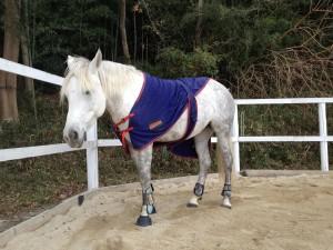 IMG 1321 300x225 馬休日の放牧