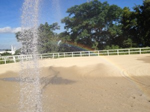 IMG 3945 300x225 夏の散水