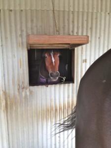 IMG 5560 225x300 〜おたべの馬窓から〜