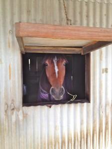 IMG 5561 225x300 〜おたべの馬窓から〜