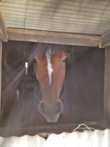 IMG 5564 225x300 〜おたべの馬窓から〜