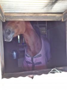 IMG 5565 225x300 〜おたべの馬窓から〜