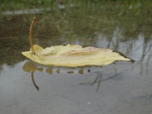 P6121630 300x225 雨の景色