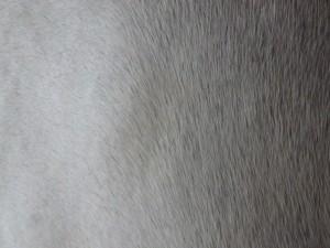 P7141011 300x225 続く「白」