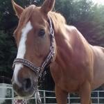 aldi e1477649443951 150x150 HFKの馬たち