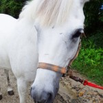 amro 150x150 HFKの馬たち