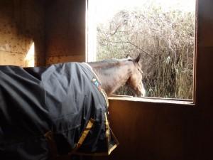 b81df9ab006871301cb17f25707c67f2 300x225 馬の好きなもの