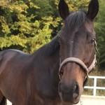 bb e1322791783770 150x150 HFKの馬たち