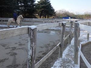 dabcc234d1ea375553dc03d22659f565 300x225 雪と馬