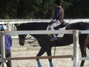 dabef98c57311583de3c7efdeacf7a9e 300x225 体験乗馬