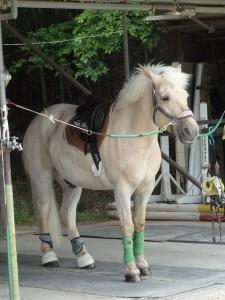 dc3ad290d0f84796d9551abd7e8fce77 225x300 馬の脚