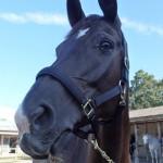 dolce e1443766416191 150x150 HFKの馬たち
