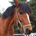 e03dc73b2a7d34dea19c5d6941e4ff7e e1299902952360 150x150 HFKの馬たち