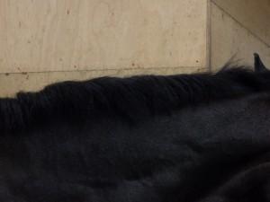 e7adac677c3190d58dd2a78bf5dc08f2 300x225 尻尾と鬣