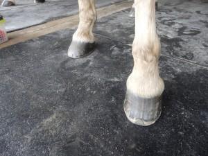e879db3cf3689bbd320e54c3e699cb24 300x225 馬の脚