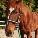 ef4bb5b5f1a0d8f93d529d69584525a5 e1291082523296 150x150 HFKの馬たち