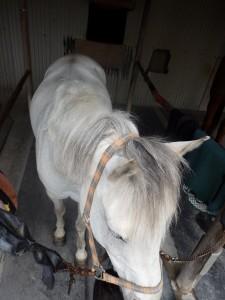 f01e78580b17a198a1ea9763d80552b2 225x300 上から馬を見てみよう