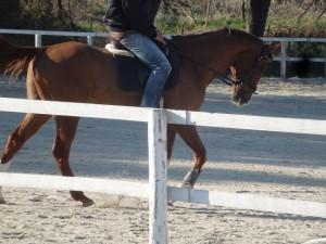 f8c9684a4104442e9c1e22e7e40e9960 300x225 馬場、蹄洗場、馬房