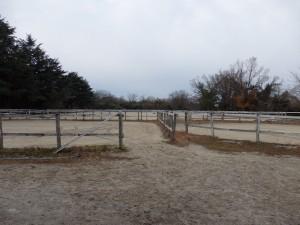 f8c9684a4104442e9c1e22e7e40e99604 300x225 馬はどこへ消えた?