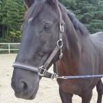 farel e1477649501261 150x150 HFKの馬たち