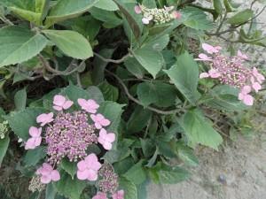 ff7b9a1f0e6480e124ea385cb7c699fb 300x225 咲くやこの花