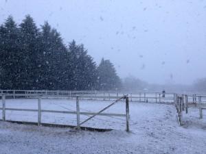 雪でしたね