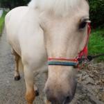 pac e1440232978948 150x150 HFKの馬たち